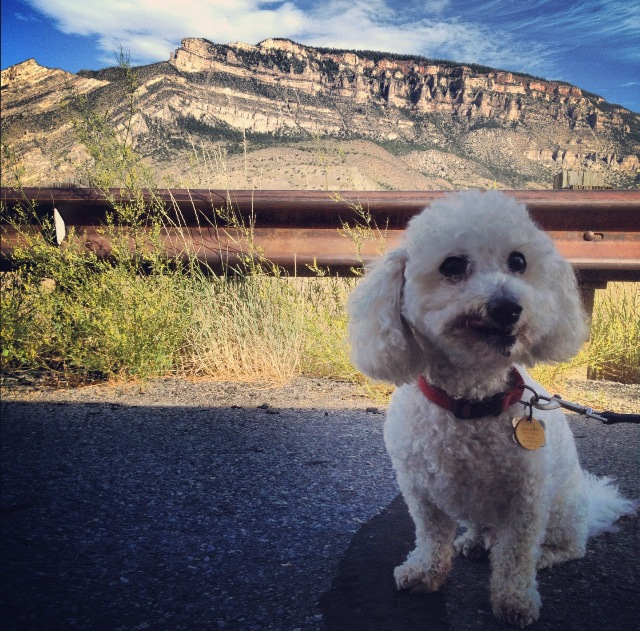 Louie in Wyoming